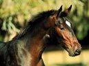 Photo de moi-chevaux-1996