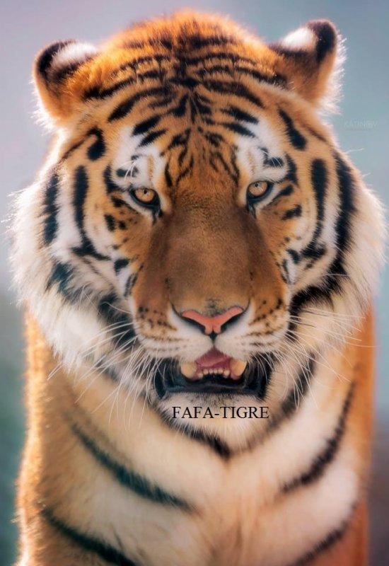 FAFA-TIGER