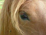 mes amis les chevaux