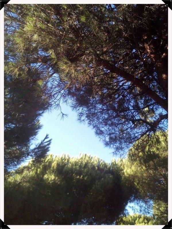 Ses arbres sentent bon surtout par cette canicule ou il fait 32° à l'ombre ... (: