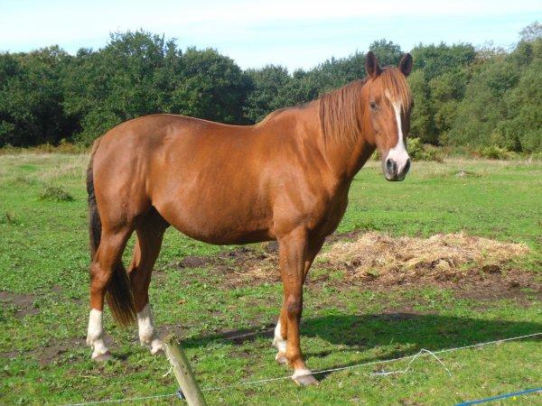 Oups le plus BEAU GOSS de tous les chevaux avec Eldric