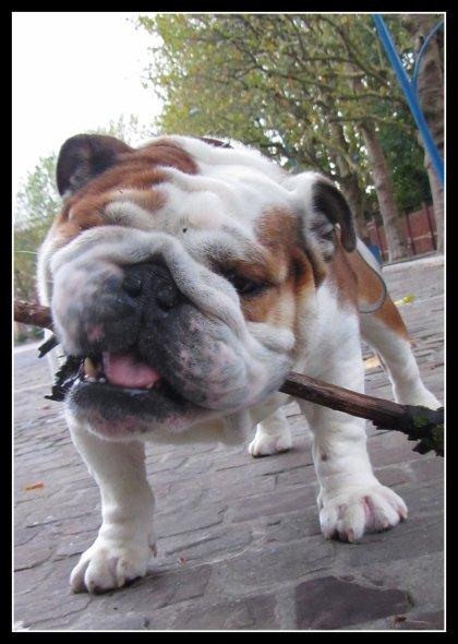 Miam le bâton!