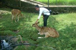 moi et bambi
