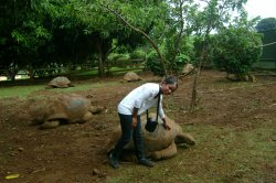 la tortue et moi