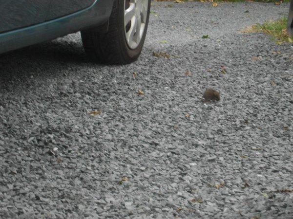 rocky et la souris vous souhaite un bon dimanche