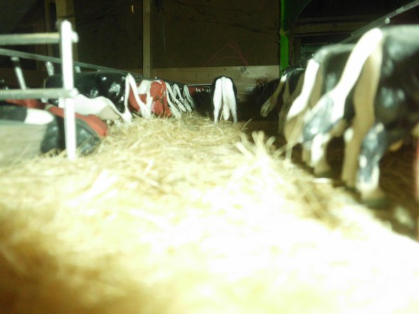 actu a la ferme marschalle
