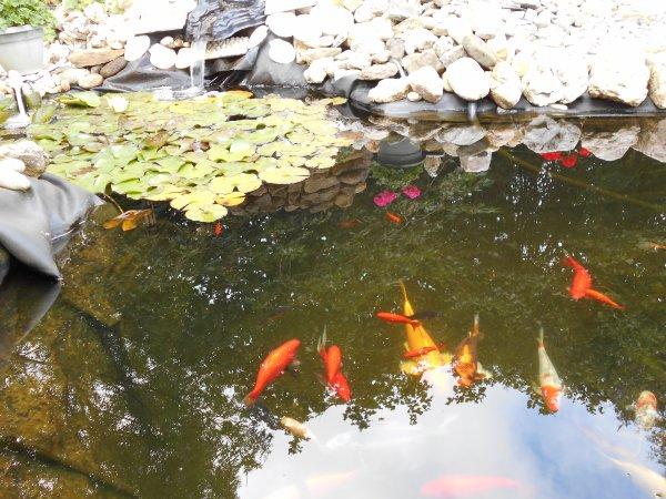 petite vue sur l étang