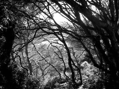 Perdue dans le bois