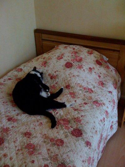 schubert à la sieste