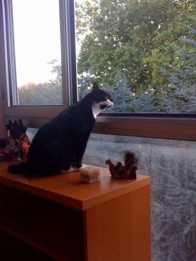 schubert à la fenêtre