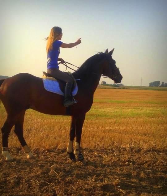 Les fille j'ai le regret de vous annoncé que tout se qu'il reste du prince charmant, c'est son cheval.. H ♥