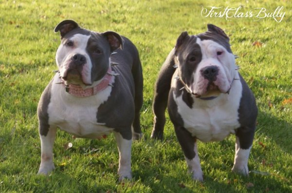 FirstClassBully Loca & FirstClassBully Joker