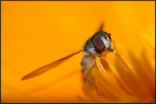 <=== Le beau Temp reviens , les insecte aussi = ) ===>