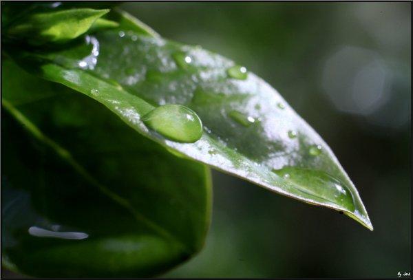 <= La pluie tombe comme nous tombons amoureux : en déjouant les prévisions. >>   ( Martin Page )