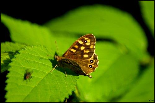 L'amour c'est comme un papillon, il est hors de portée quand on le chasse ; mais si on le laisse tranquille, il peut très bien venir se poser sur notre épaule