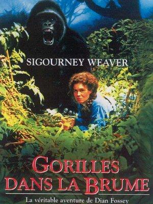 Gorilles dans la brume.