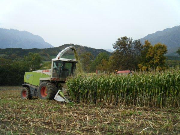 Ensilage de maïs 2010 >>> Claas et Mccormick avec Miro <<<