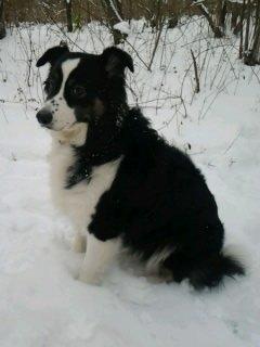 Ma chienne , mon plus beau cadeau ♥
