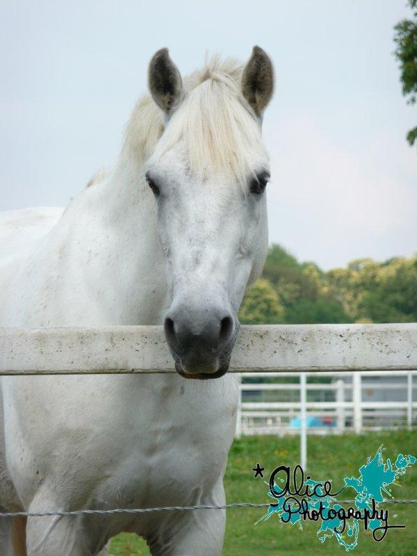Double Poney / Espoir => ancien poney