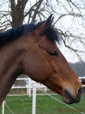Double Poney / Forestine => ancien poney