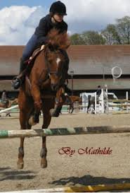Double Poney / Lazare => ancien poney