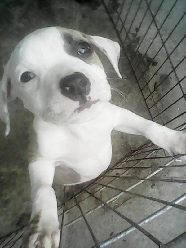 ** mon bebe chien **