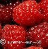 summer---sun---66