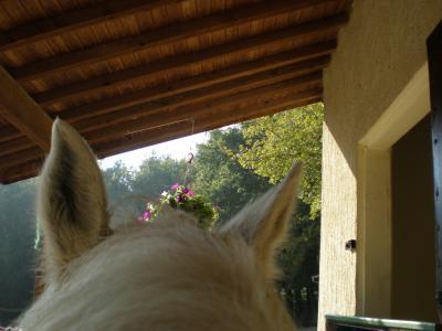 l'air du pardis est celui qui souffle entre les oreille d'un cheval