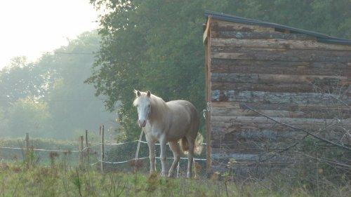 Mon poney d'amour...