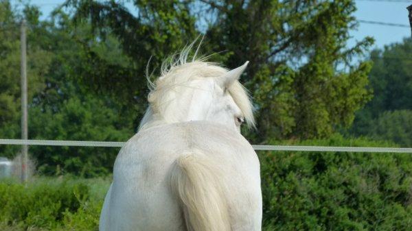 Le poney de ma vie