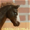 Photo de ChestnutXStable