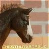 ChestnutXStable