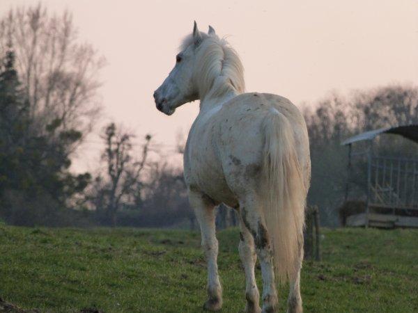 """""""Être à cheval, c'est être à une hauteur entre terre et ciel, qui n'existe pas""""."""