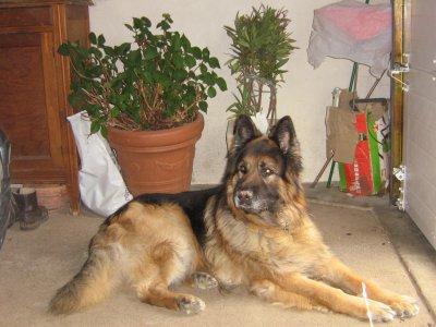 Mon chien Djeump