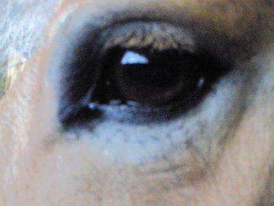 Dans tes yeux reflette mon bohneur & mon espoire de t'avoir ♥