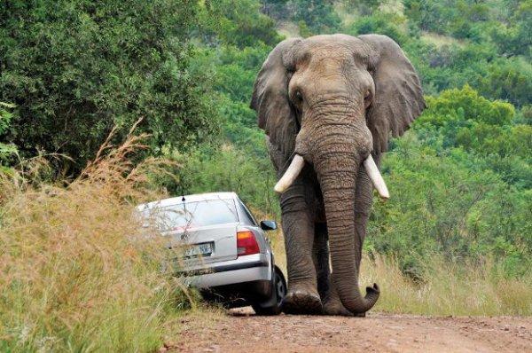 Code de la route africain !!!!!!!!!!!!!!!!!!!!!!!!!!!!!!!!!!!!!!!