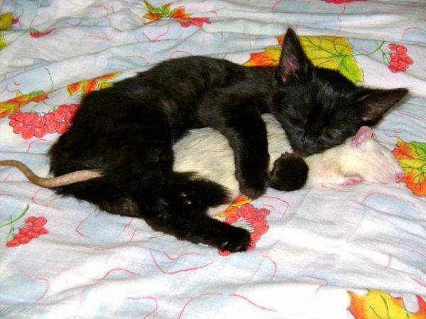 Quand le pouvoir de l'amour surmontera l'amour du pouvoir, le monde connaîtra la paix.