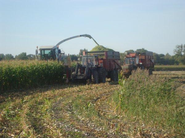 Ensilage de maïs 2009