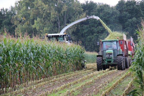 suite ensilage maïs