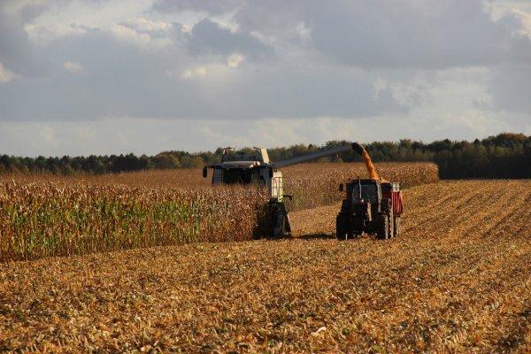 Battage maïs 2014 avec quelques rencontres