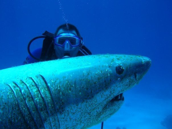 Egypte hurghada mer rouge
