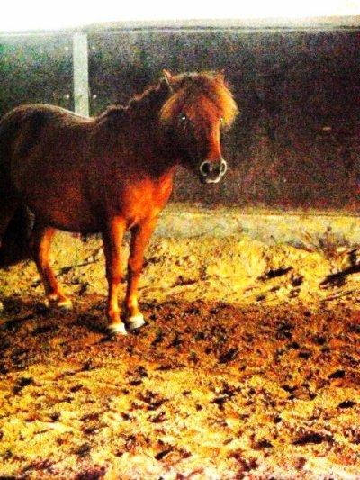 Etre heureux à cheval, c'est être entre terre et ciel, à une hauteur qui n'existe pas ..