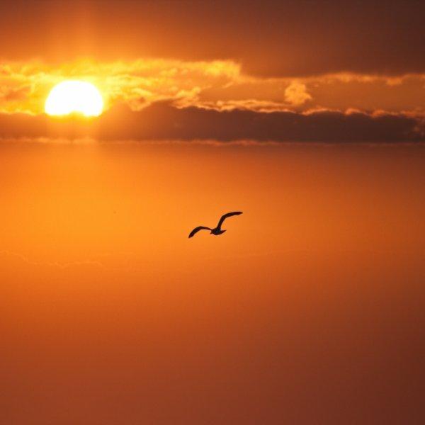 « Nous serons des oiseaux »
