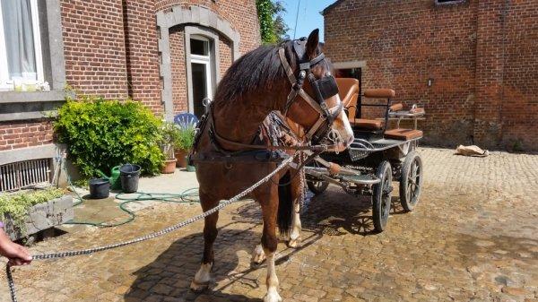 Arthur et son carrosse:magnifique