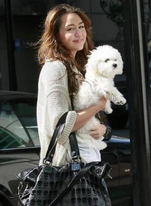Photoshoot des chiens de Miley