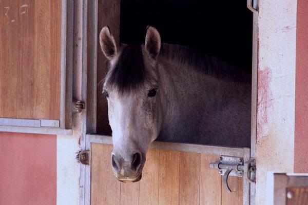 Mogadon, décidement le poney de tout mes rêves ♥