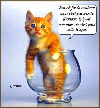 YOUPI  ! ! !  ON  PEUT  FAIRE  DES  GROSSES  CONNERIES  ! ! !  HI HI HI HI  ! ! !
