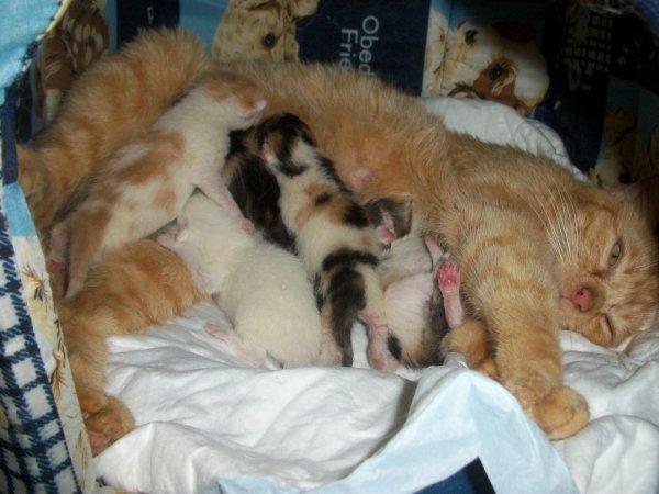 ma minette et ses cinq petits qui ont vu le jour la nuit du 1er au 2 mai 2012
