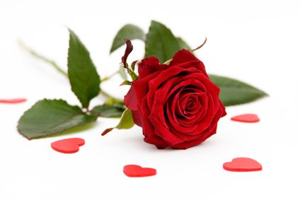 Rose d'amour..