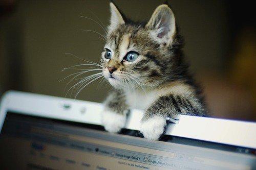 So cute =)
